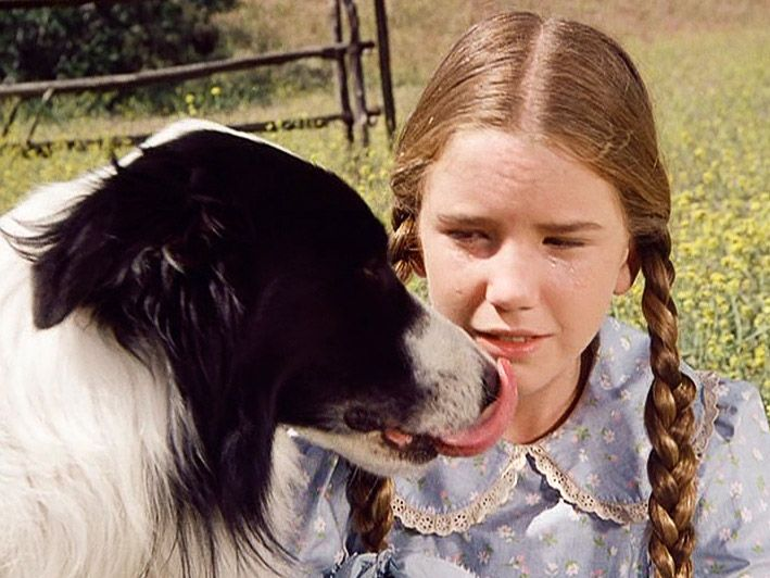 Laura And Stray Dog Bandit Little House Laura Ingalls 80 Tv Shows
