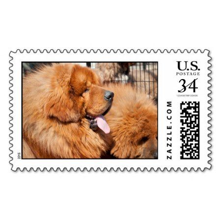 Red Tibetan Mastiff Postage Stamp Close-up of a Red Tibetan Mastiff puppies togerther on a postage stamp for the dog lover with everything #protection #black #domestic #pup #tibet #dog #watchful #canines #culture #cute #tibetan #loyal #canine #furry #mastiff #animal #pets #pupy #faithful #breed #purebred #large #puppy #dogs #young #attentive #sentinel #guard #animals #giant #watchdog #tongue #tibetan #dog #designer #cool #fun...