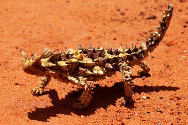 15 Best Known Unique Wild Animals Of Australia Australia Animals Animals Wild Unique Animals