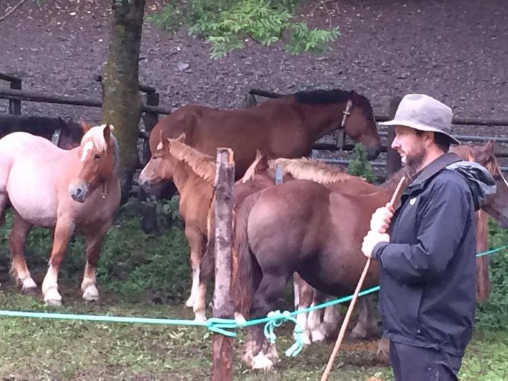 Collecting Breton horses in the Pyrenees 2016