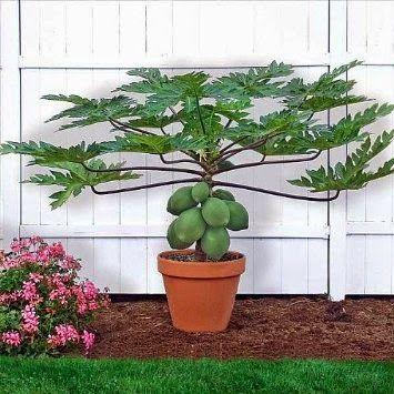 //  Veja as vantagens de usar produtos orgânicos, plantados e colhidos em casa e aprenda a montar um vaso. Veja também dicas para cuidar bem das plantas.