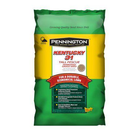 Pennington Kentucky 31 Tall Fescue Grass Seed, 3 lbs, Multicolor