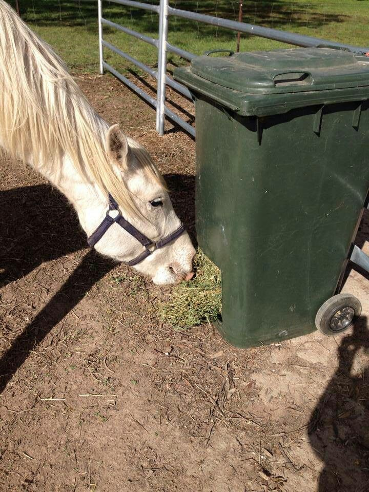 Garbage Can Hay Feeder Around The Barn Pinterest