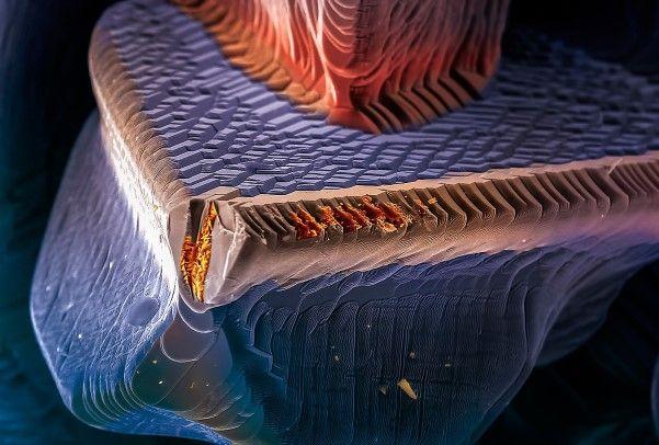 Panel solar. Micrografía electrónica de barrido de un cristal de CIGS (Cobre, Indio, Galio y Selenio).