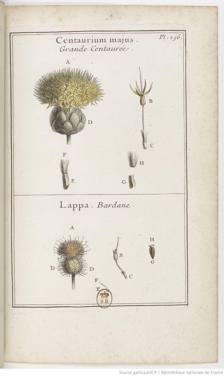 Grande centaurée ; Bardane; Élémens de botanique, ou Méthode pour connoître les plantes, par M. Pitton Tournefort, 1694