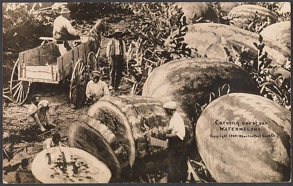 Carving One of Our Watermelons Photomontage by William H. Martin - (American, 1865–1940) Date: 1909