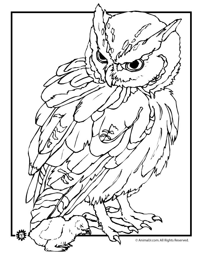 owl coloring pages free printables owl coloring pages realistic owl and baby coloring page - Realistic Wildlife Coloring Pages