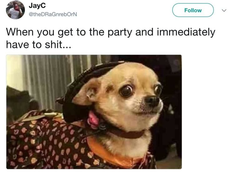 19 #chihuahua Memes That Are Weirdly Relatable | Chihuahua ...