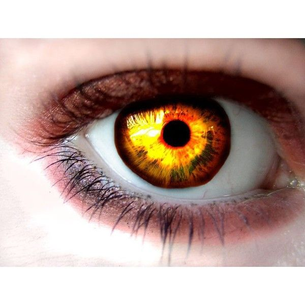 Yellow Eyes ❤ liked on Polyvore featuring beauty products, skincare, eye care and eyes