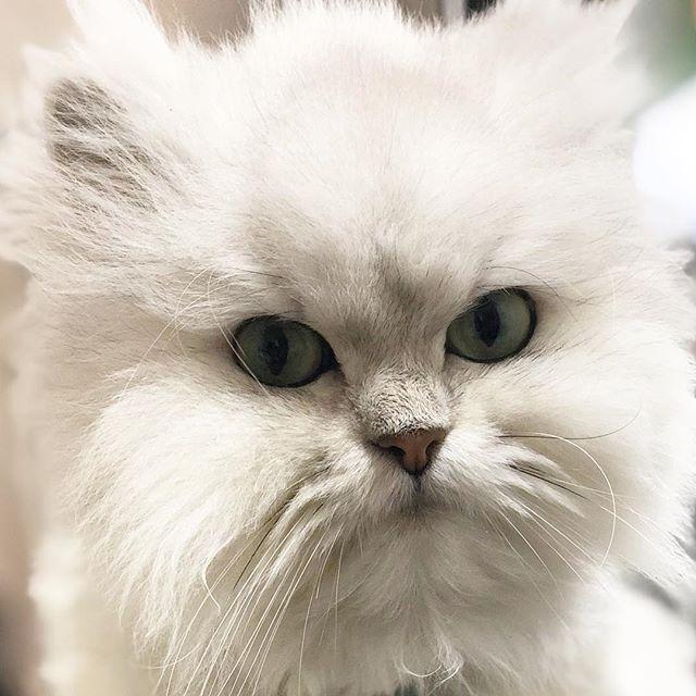 久しぶりののえるちゃん発情中でしたがここ2日は中休み ねこ ねこすたぐらむ Animals Cats Instagram
