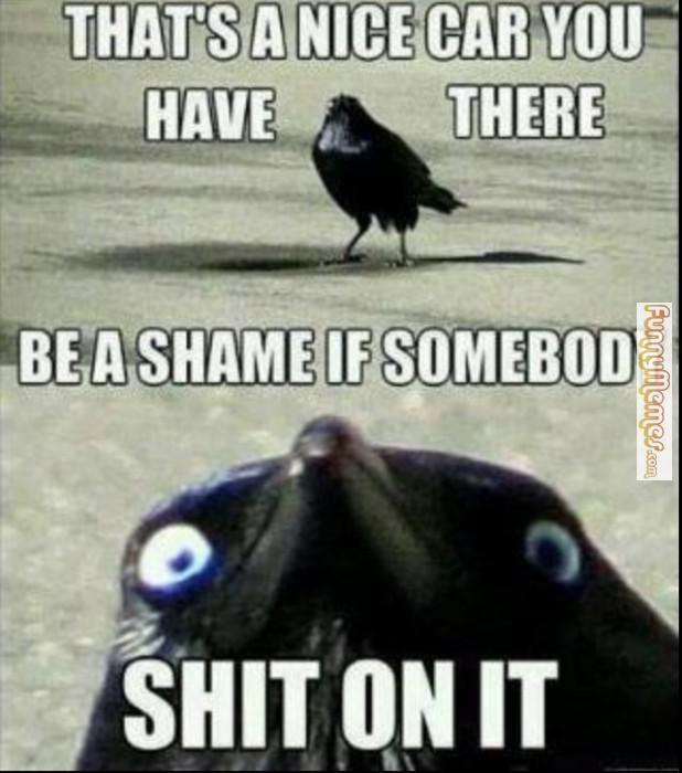 10 grappige memes