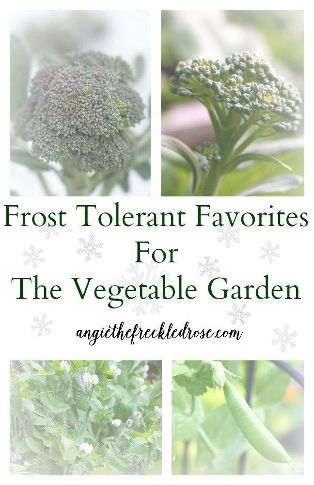 Frost Tolerant Favorites For The Vegetable Garden 400 x 300