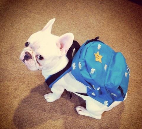 Hora de ir pra escola !