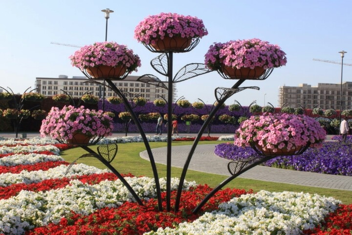 Miracle Garden, Dubai Why we love the UAE! Pinterest