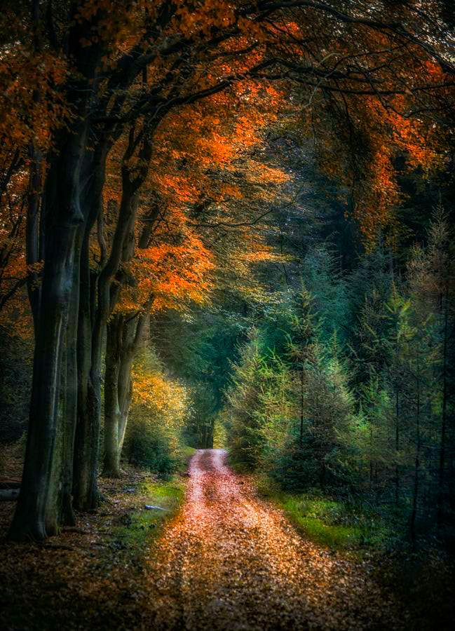Forest lane in autumn (Netherlands) by Ton lع Jeune / 500px