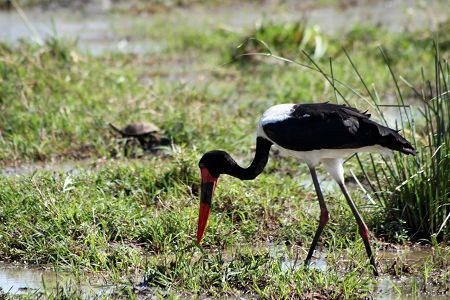 Overview of where to go birding in South Africa - South African Tourism's website is a useful starting point.
