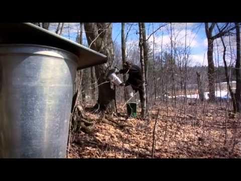 La production du sirop d'érable au Québec - YouTube
