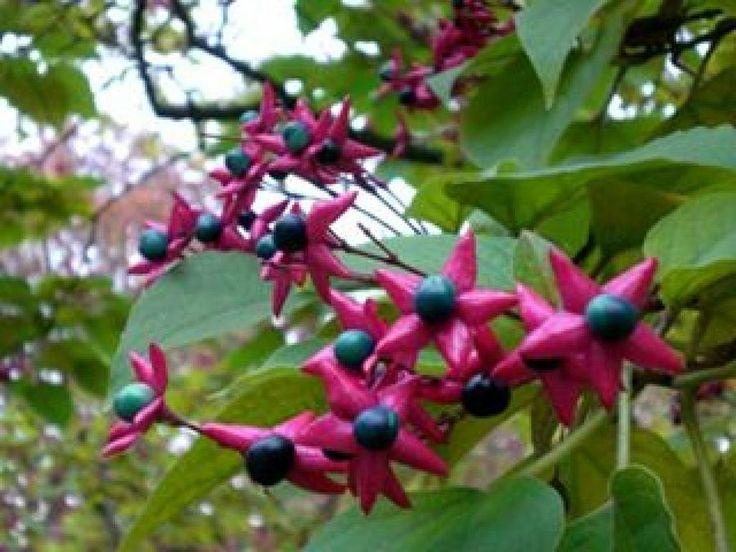 17 best images about bonitas flores 3 on pinterest