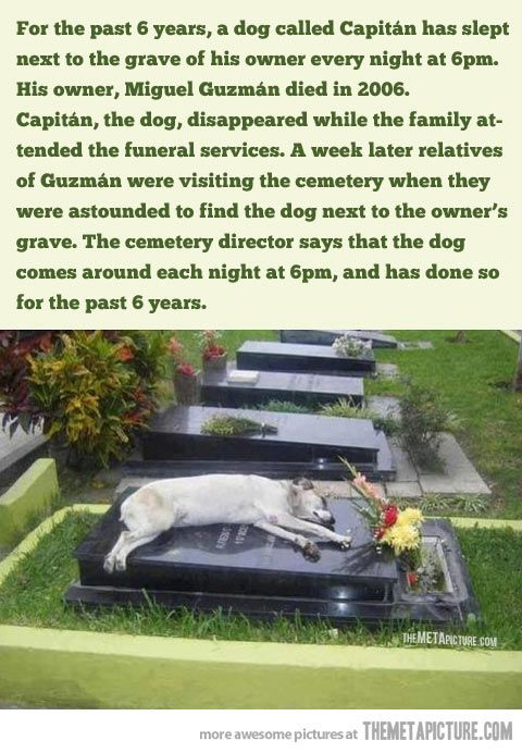 This is an absolutely amazing story. <3 I want this kind of love with any dog I'll ever own..wow.