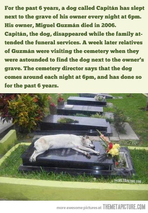 A touching story…