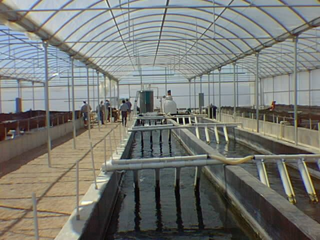 98 best aquaponics images on pinterest aquaponics for Fish stores in arizona