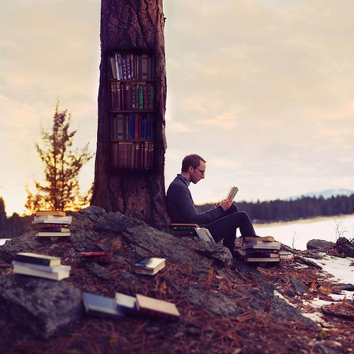F is for Finding Fiction in the Forest