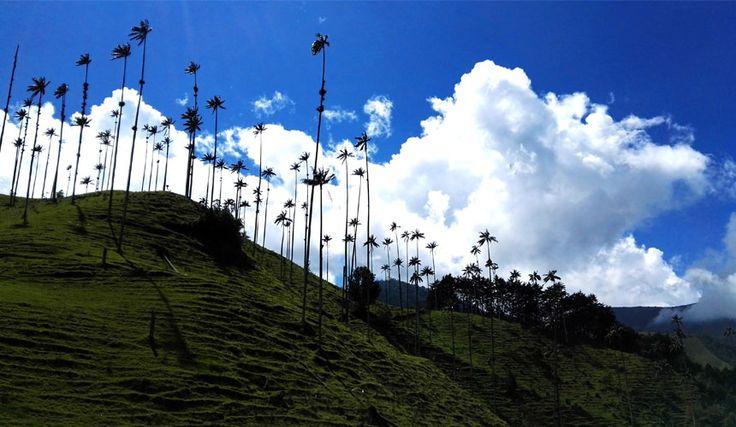 Uncover Colombia Blog - Valle de Cocora Colombia