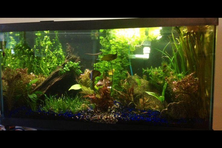 55 gallon fish tank uk - 55 Gallon Corner Fish Tank | eBay 2017 - Fish Tank Maintenance