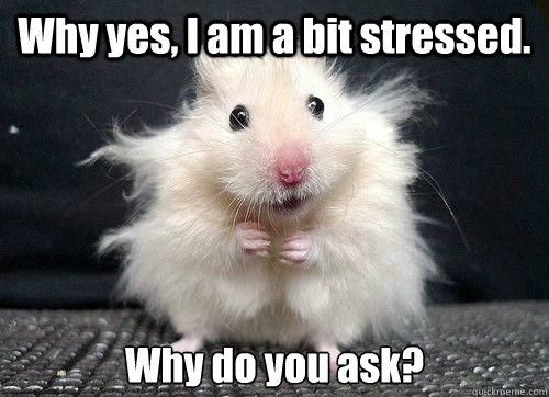 This photo seemed applicable after the second full week of classes... #stressed #college #meme
