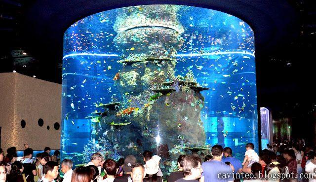 Entree Kibbles: S.E.A Aquarium - World's Largest Aquarium and World's Largest Viewing Panel @ Marine Life Park [Resort World Sentosa]