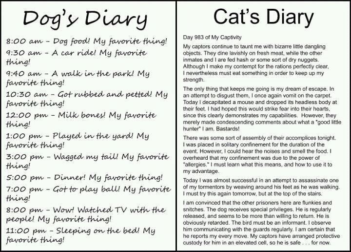 I imagine the cat with a french accent for some reason.: Dogs Diaries, Pet, Dogs Cat, So True, Cat Diaries, So Funny, Dogcat, I Love Dogs, Animal