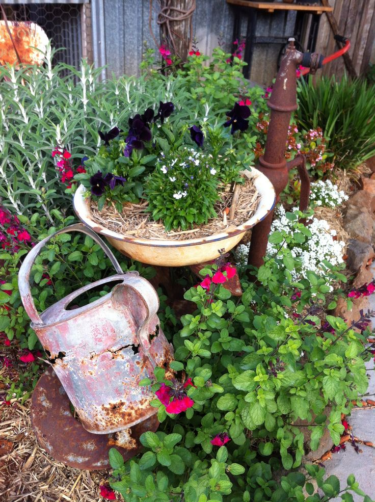 Cottage garden. Rusty watering can. Enamel bowl planter. Old rusty pump. Toowoomba.  Australia.