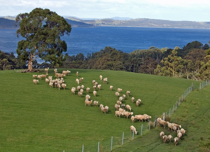Visit Grandvewe, Australia's only organic sheep cheesery, and sample up to 15 different types of cheese!
