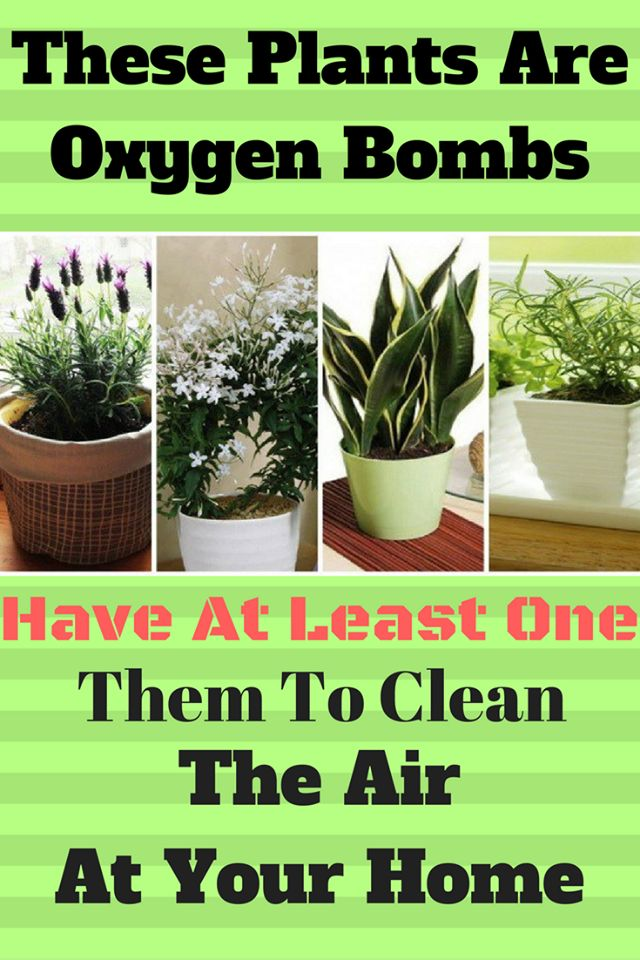 Plants we develop in our homes are in charge of more oxygen as well as have the capacity to clean the quality of both shape and poisons. In this way, it is more averse to breathe in thereof, which …