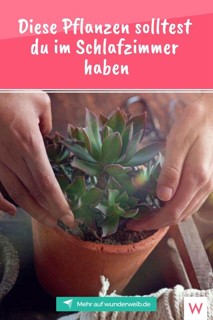 Diese Pflanzen solltest du im Schlafzimmer haben