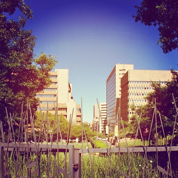 Sappi Park in Braamfontein. #johannesburg #sky #park #urban #instagram #urbangenesis