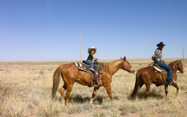 Milky Ranch Beef - Arizona grass-fed beef near St. Johns - natural and local mail order steaks