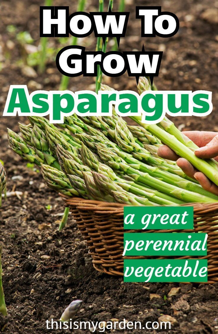 Raised Beds Petunias Orchid Care Container Plants Geraniums Succulents Succulent Containers Win In 2020 Growing Asparagus Perennial Vegetables Organic Vegetable Garden