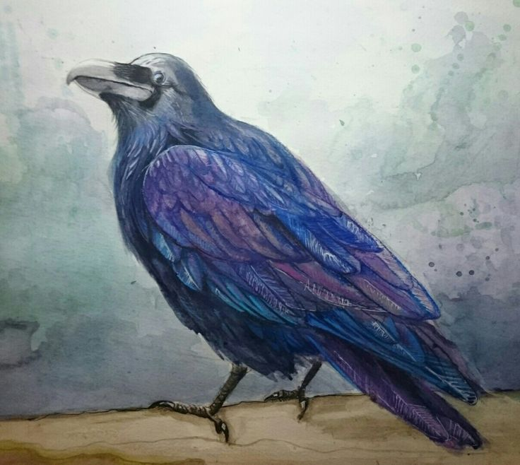 🐦 the raven or the crow. Intelligent animal painted in watercolour technique.