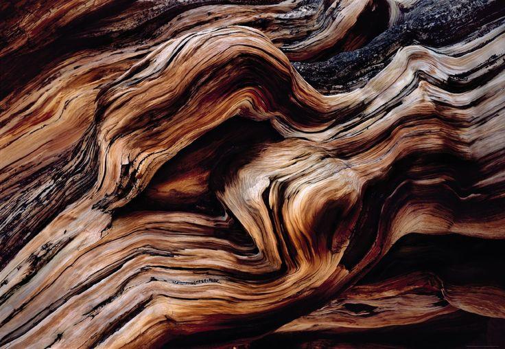 La naturaleza es el mejor diseñador: el tronco de un viejo pino bristlecone. Contacta con nosotros al 951 081 159, vía email info@bricotiendas.com o visita nuestra tienda especializada en papeles pintados www.papeles-pintados.es.