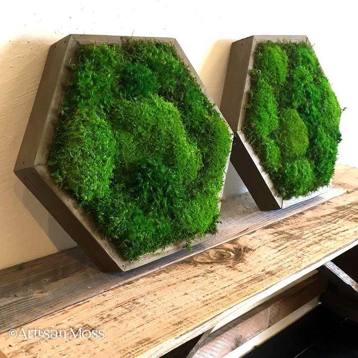 17 Best Ideas About Moss Wall Art On Pinterest Moss