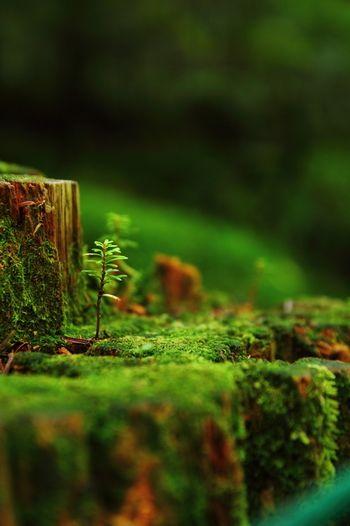 「苔の森開き」や「苔の観察会」といった苔に関するイベントも開催されています。 ちなみに、今年2015年の「苔の森開き」は5月31日に行われますよ。 苔の魅力の虜になってしまった方は、ぜひ足を運んでみてくださいね。