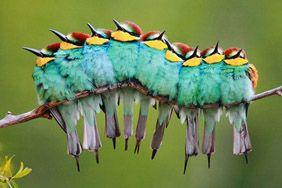 Праздник птиц - праздники и фестивали в ЭТНОМИРЕ