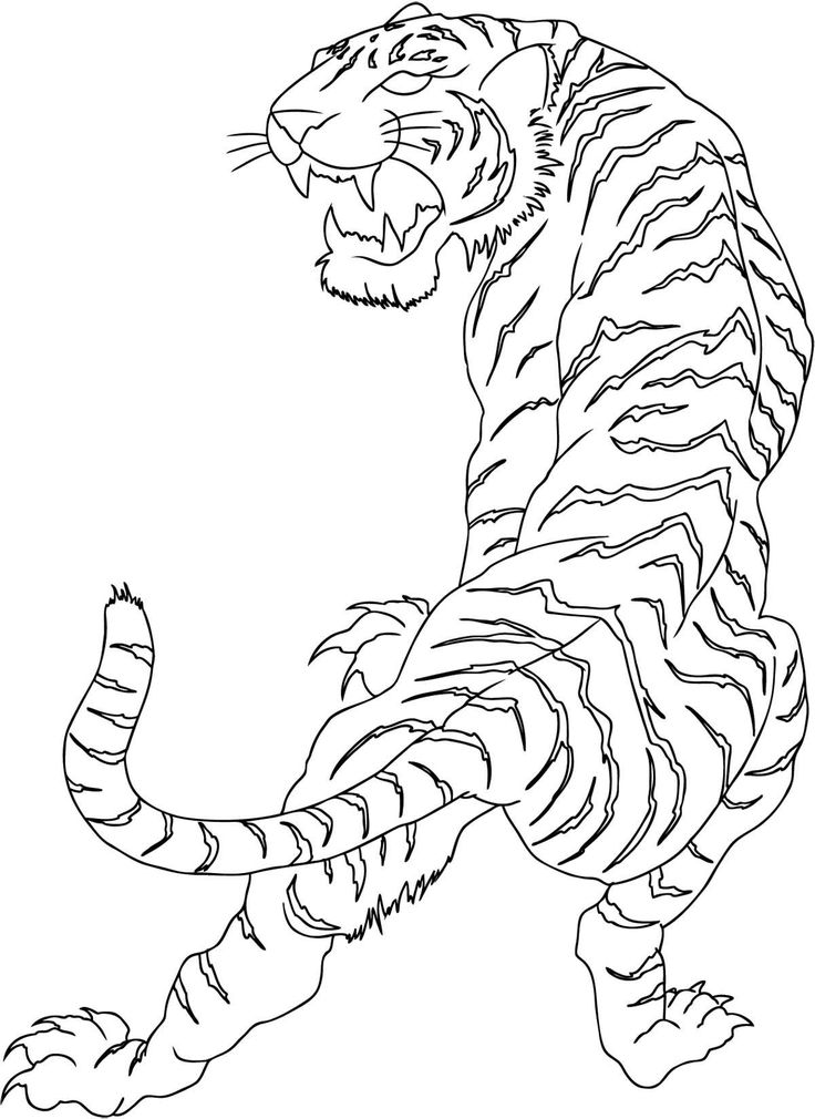 indonesian white tiger drawing - Google zoeken