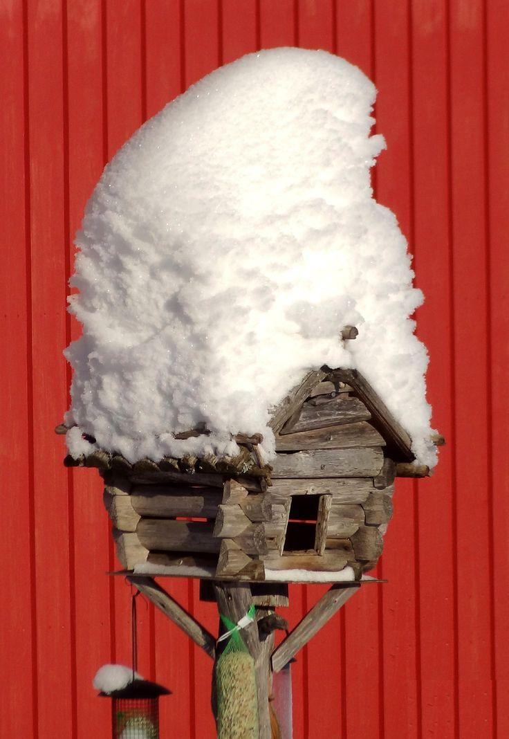 Bird feeding place in Puolukkamaan Pirtit Reindeer farm in Pello in Lapland