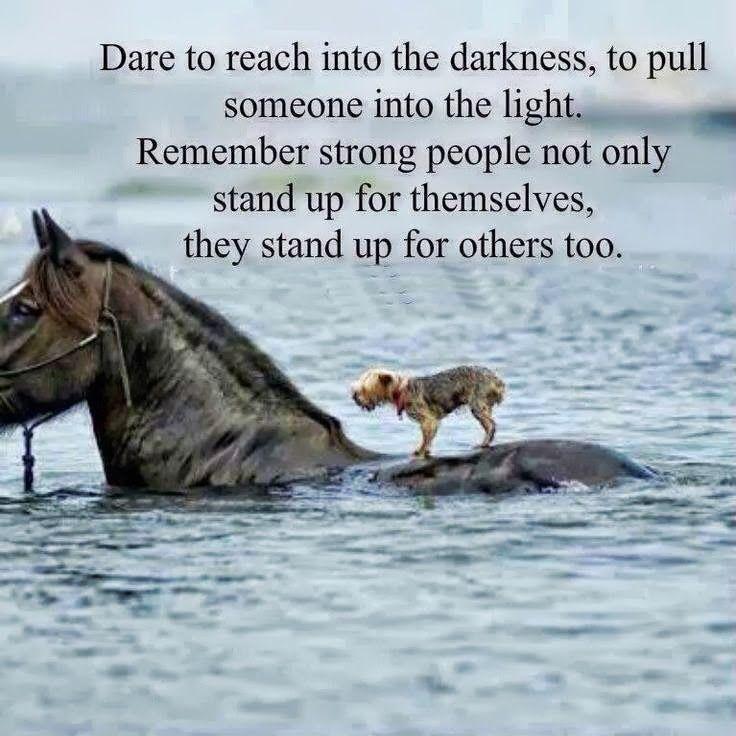 Encouraging Animal Quotes. QuotesGram