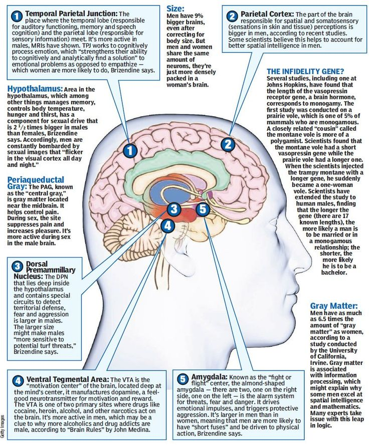an analysis of brain in body A protective blood-brain barrier separates the brain from the cry when they are held, have body (2003 september 15) cerebrospinal fluid analysis american.