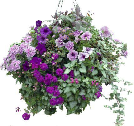 Hanging basket van kwekerij Morning Glory. #wishlist