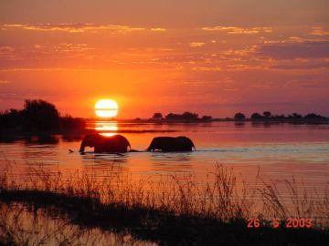 Mark Webster captured a pair of elephants taking a sunset swim. For more incredible sunset images visit www.greatestsunsets.com