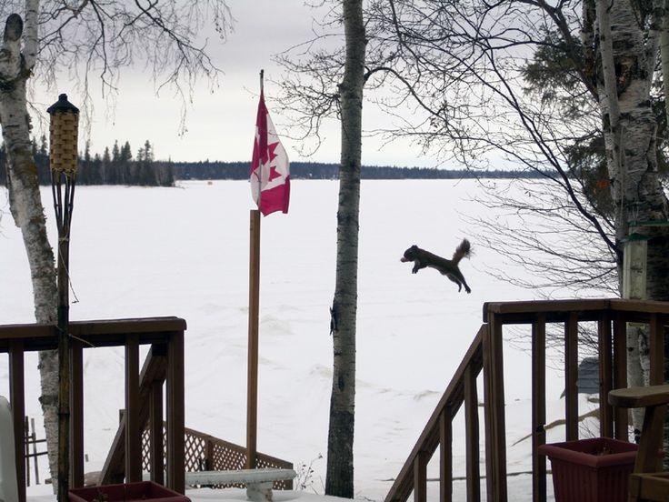 Squirrel Jump - Emma Lake, Saskatchewan  #CDNGetaway